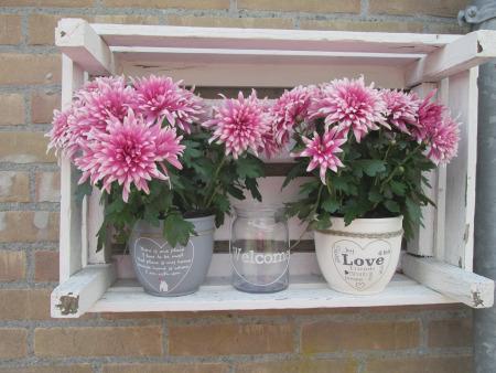 Muttertag geschenkideen Blumenregal